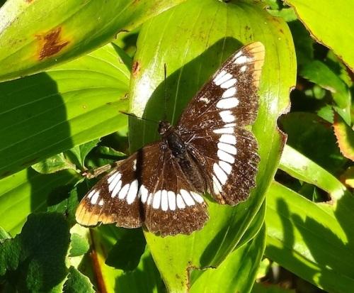 an autumnal butterfly