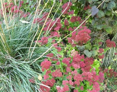 Sedum 'Autumn Joy' and Stipa gigantea