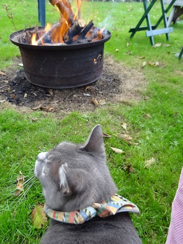 Smokey enjoys a fire.