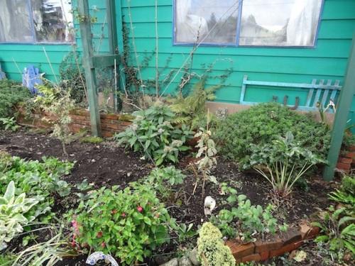 front garden, weeded