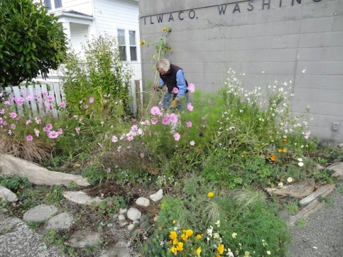 before work: Allan tidying in our volunteer garden at the post office