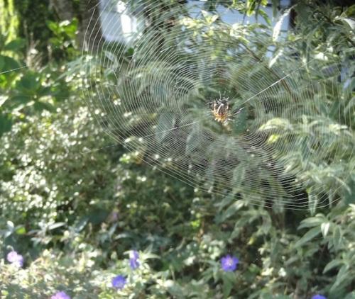 ...had several big spider webs.
