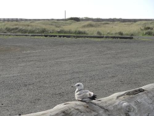 a nearby gull