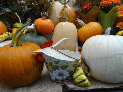 lots of pumpkins for sale