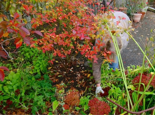 Allan's photo: In the thick of fall clean up