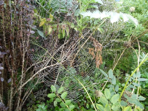 Spider webs are all over the garden and the arbours.