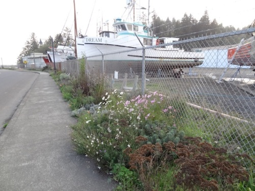 We'll do fall clean up on the boatyard garden one of these days.