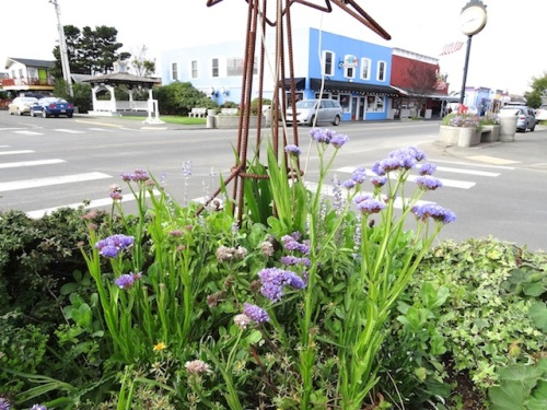 This blue statice from The Planter Box has been a real do-er in the Lewis and Clark Square planter.