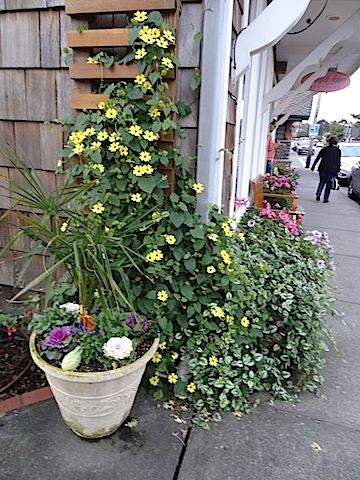 one last Cannon Beach garden photo