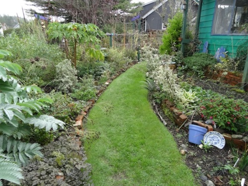 front garden path all greened up after a brown dormant mid summer