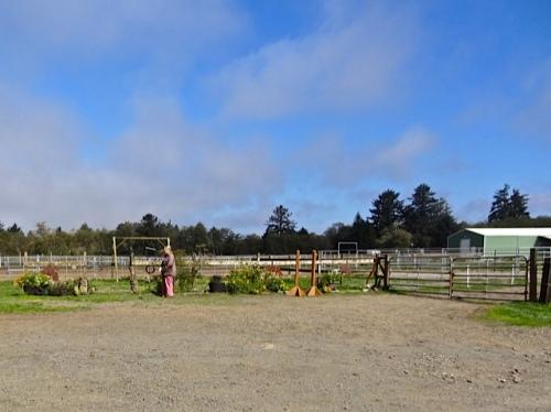 Allan's photo: our small and narrow Red Barn garden