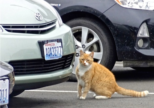 Parking Lot Cat was there to greet us. (Allan's photo)
