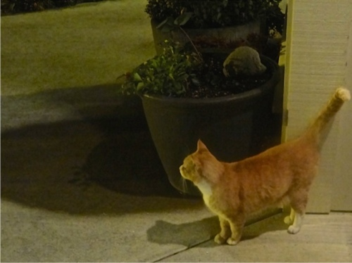 Parking Lot Cat waiting to bid us goodnight.