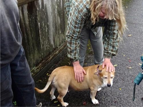 Steve's adorable dog: half pit bull, half dachshund!