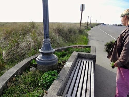 more planter weeding (Allan's photo)