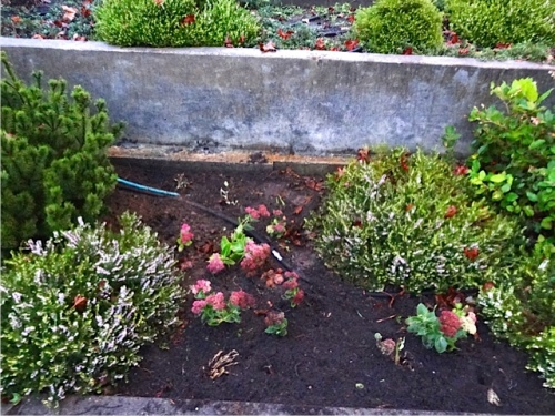 and some more Sedum 'Autumn Joy' added