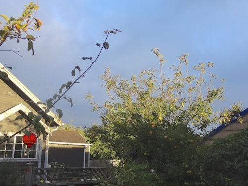 looking east from the porch: bright sun and dark sky