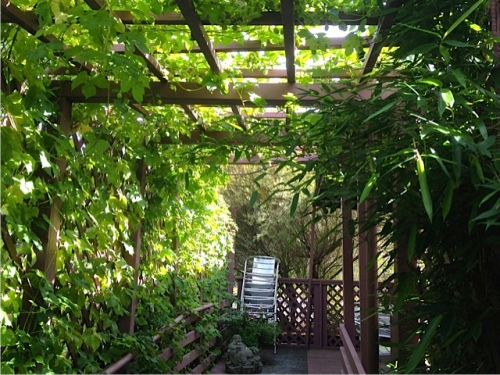 the entry to the dining deck, with hops; Allan checked it for sneaky bindweed.