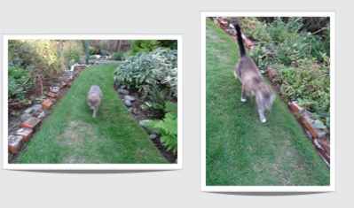 Smokey and Frosty came running to see what I was doing.