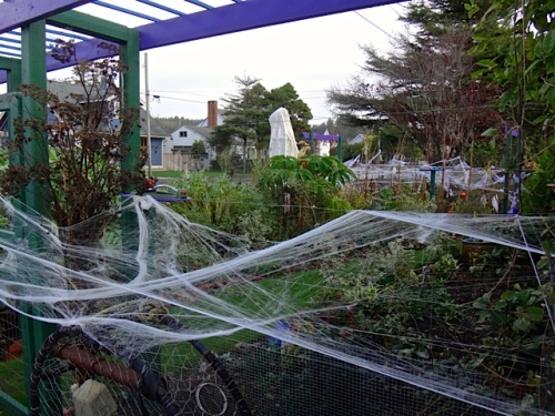 cobwebs all round the front garden (Allan's photo)