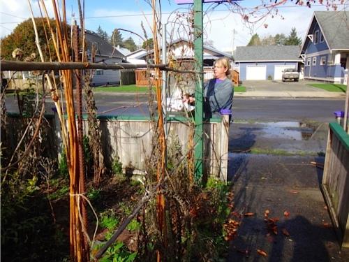 taking down the spooky plants (Allan's photo)
