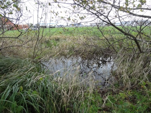 outside the fence, glorious water in the meander line ditch