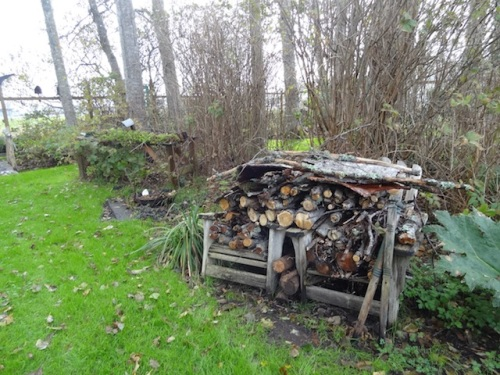 what's left of the campfire wood (last winter's storm-fall)