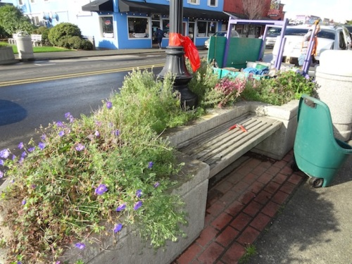 planter by police station, before