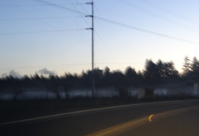 taken from moving van...just so I remember...lovely low white banks of fog over grassy field