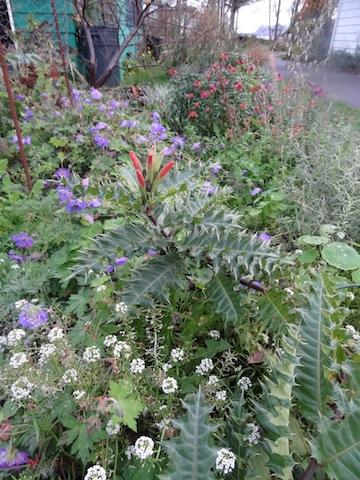 mid November garden