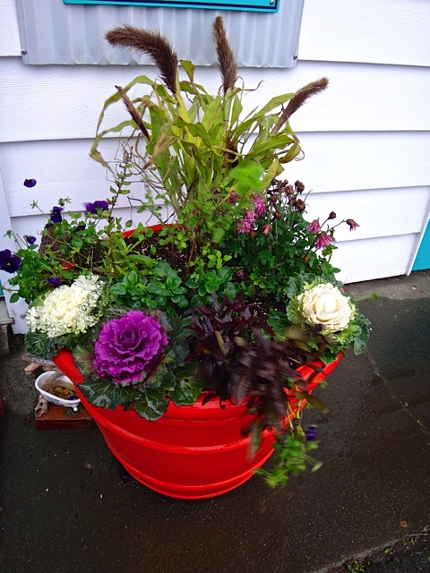 outside Carol's Salon: a seasonal arrangement created by our friend Terran.