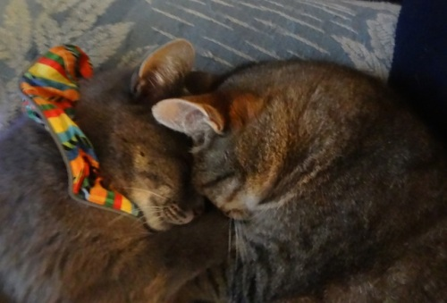Smokey and his mother, Mary