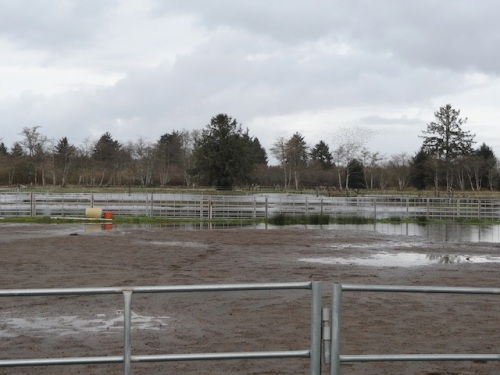 The fields were flooded at the Red Barn.