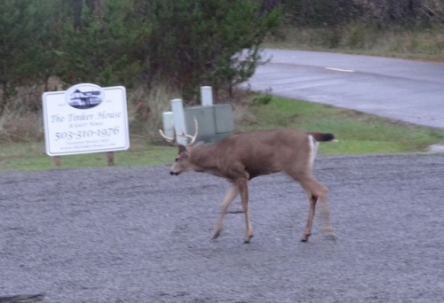 and, as we were leaving, we saw this fella.