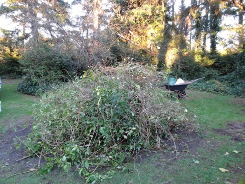 the debris pile from the rose and honeysuckle pruning