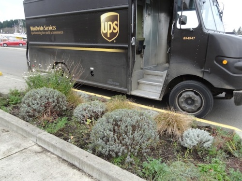 Garden: much better. Next week this truck will be bringing me, Dave and Mel, and Todd one more box of bulbs to share.