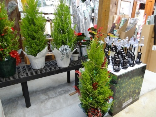 Teresa's charmingly decorated lemon cypress trees