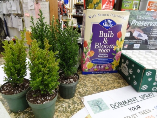 more tiny trees for sale
