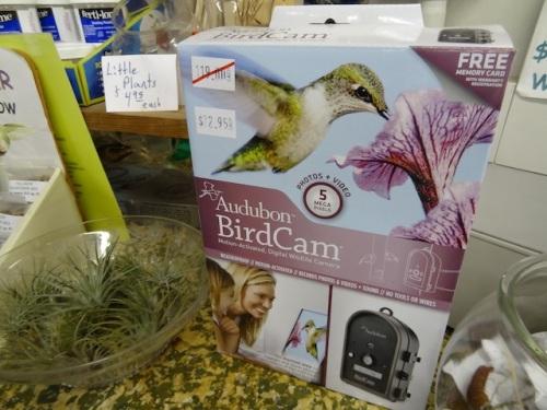 and an interesting bird cam