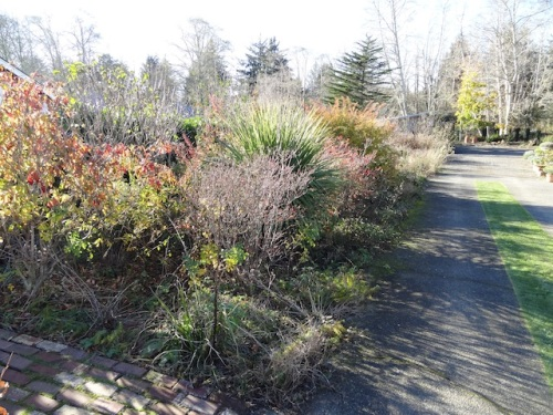 driveway garden aglow in autumn sunshine