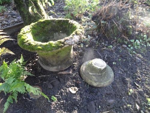 moss and mulch