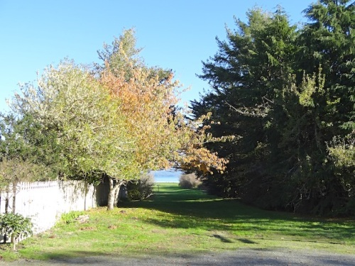 nearby: the path to the shore of Willapa Bay