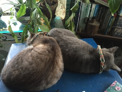 In the morning: the rare sight of Frosty and Smokey sleeping together.