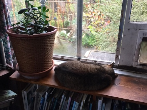 Mary in her latest favourite spot.