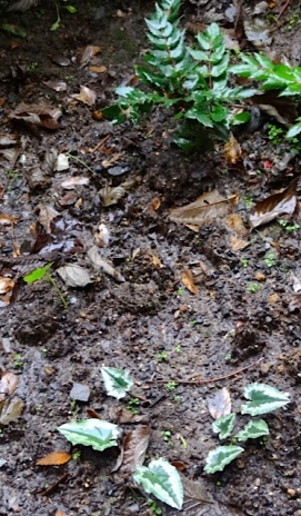 Allan's photo: sodden soil