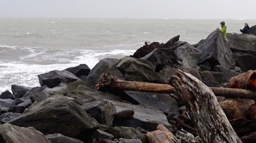 storm tossed logs