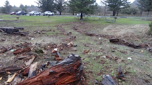 debris tossed way past the beach up onto the lawn
