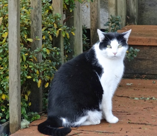 a cat seen in Seaview near the Sportsmen's Cannery
