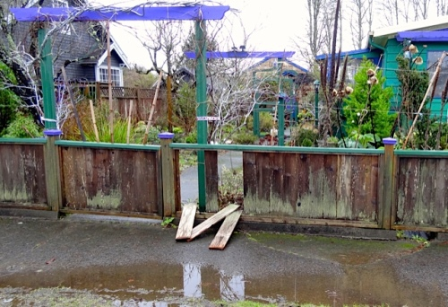 The south wind had blown boards out of the front fence, also.