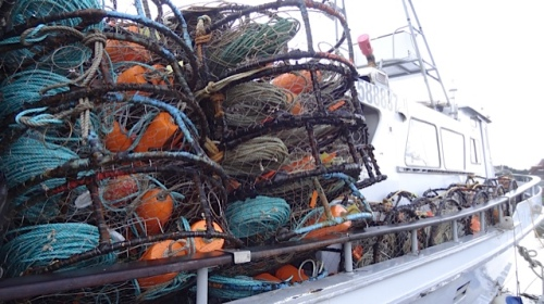 There is much excitement because the crab season is finally set for January 4, weeks later than usual.
